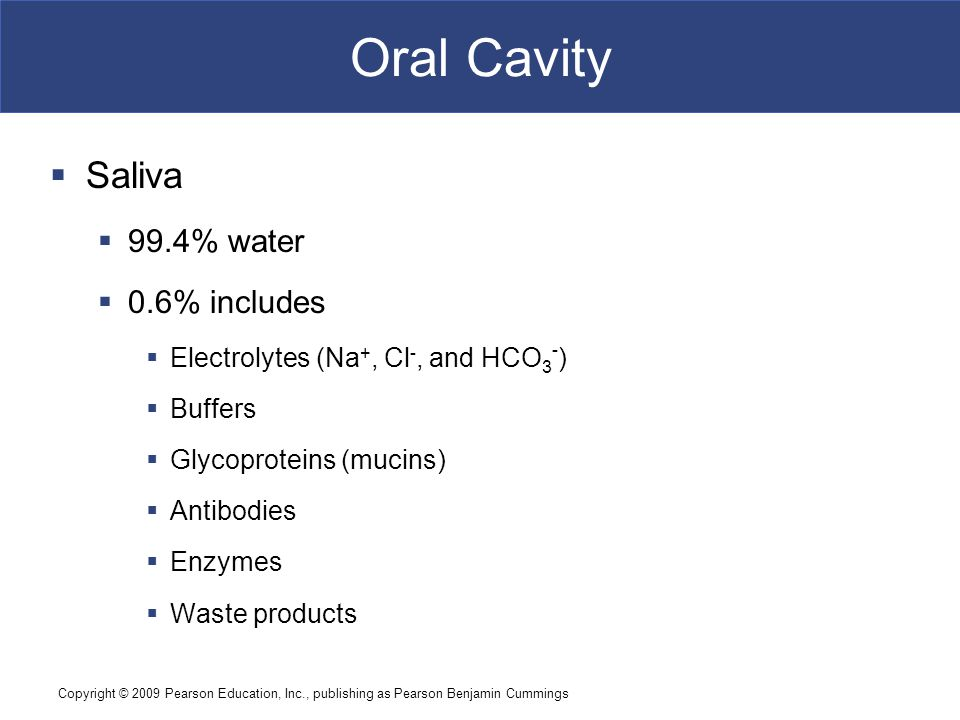 Oral Cavity Saliva 99.4% water 0.6% includes