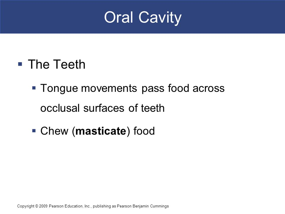 Oral Cavity The Teeth. Tongue movements pass food across occlusal surfaces of teeth. Chew (masticate) food.