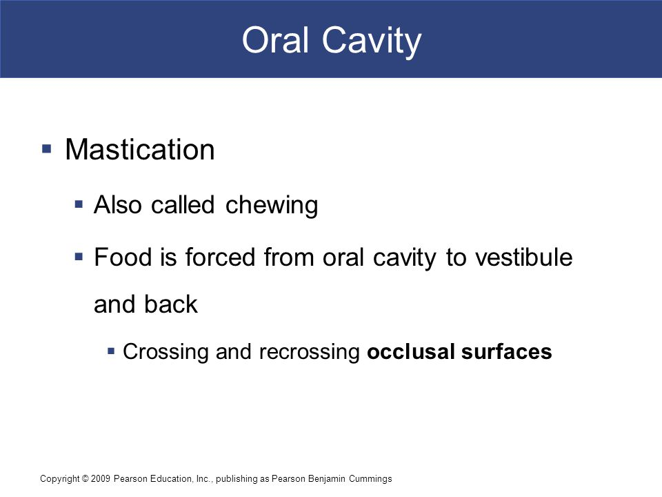 Oral Cavity Mastication Also called chewing