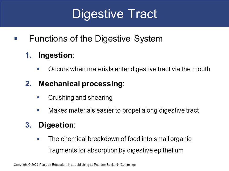 Digestive Tract Functions of the Digestive System Ingestion: