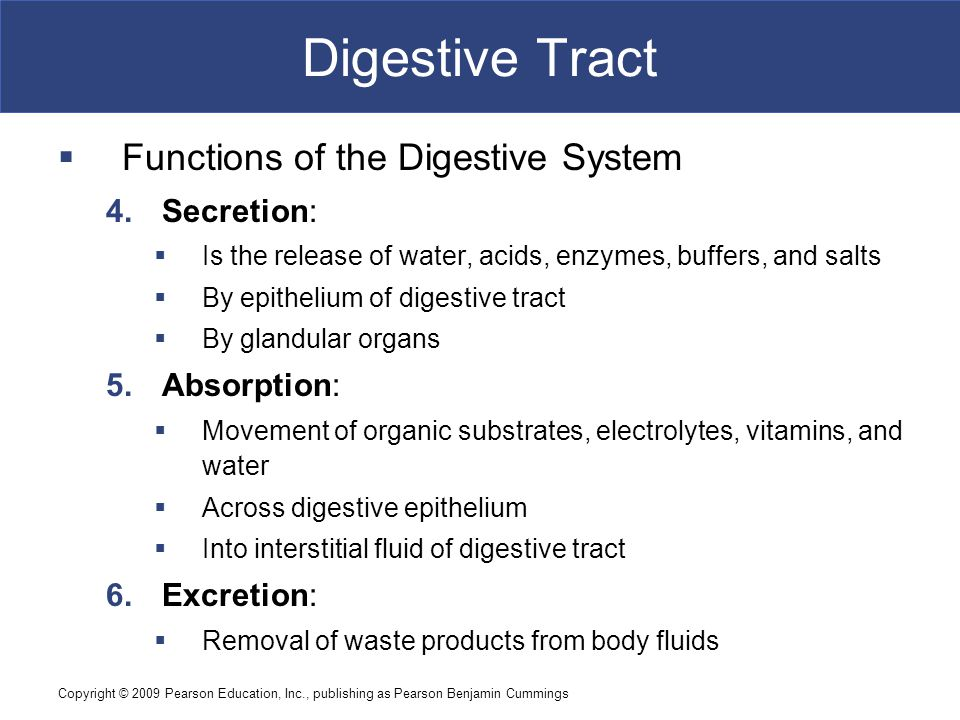 Digestive Tract Functions of the Digestive System Secretion: