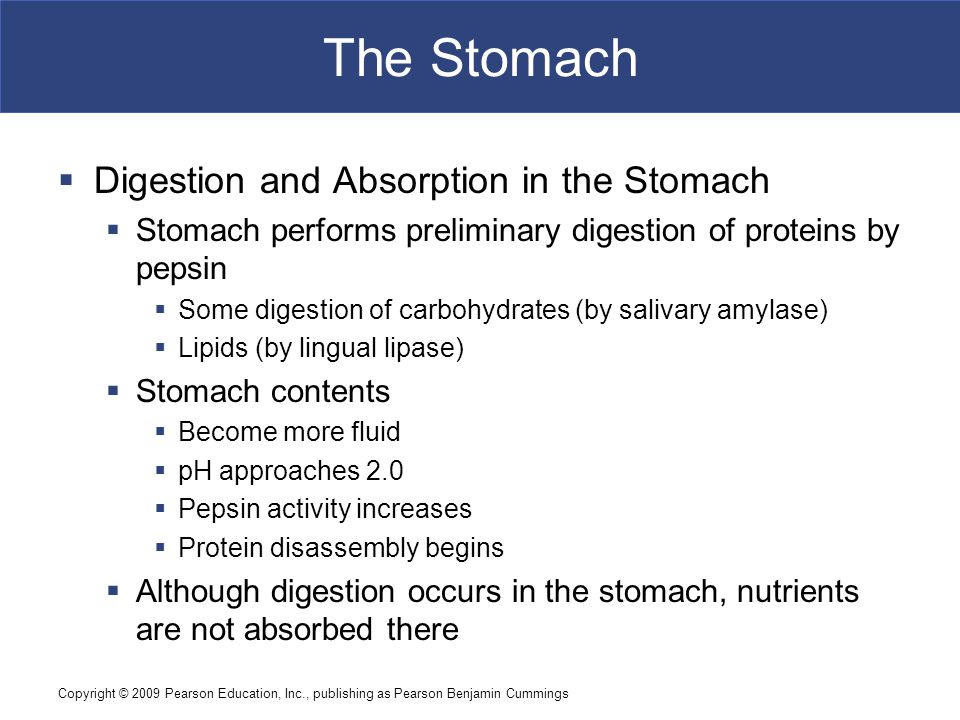 The Stomach Digestion and Absorption in the Stomach