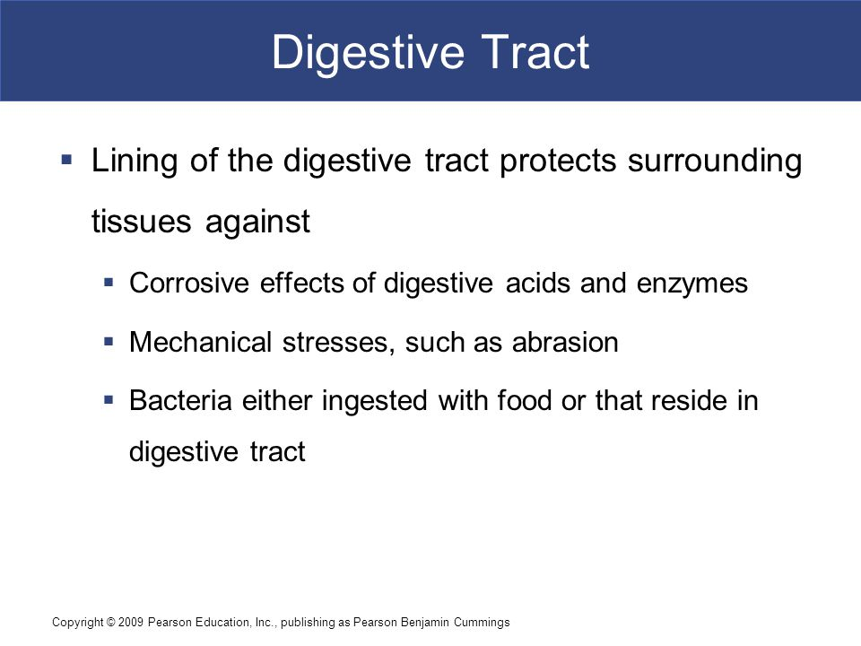 Digestive Tract Lining of the digestive tract protects surrounding tissues against. Corrosive effects of digestive acids and enzymes.
