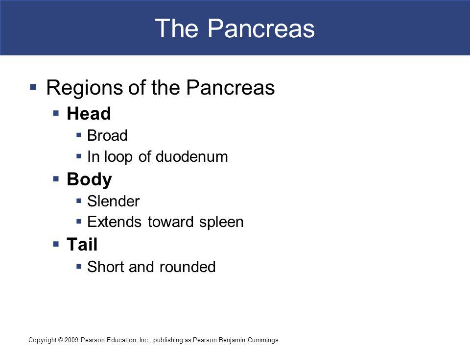 The Pancreas Regions of the Pancreas Head Body Tail Broad