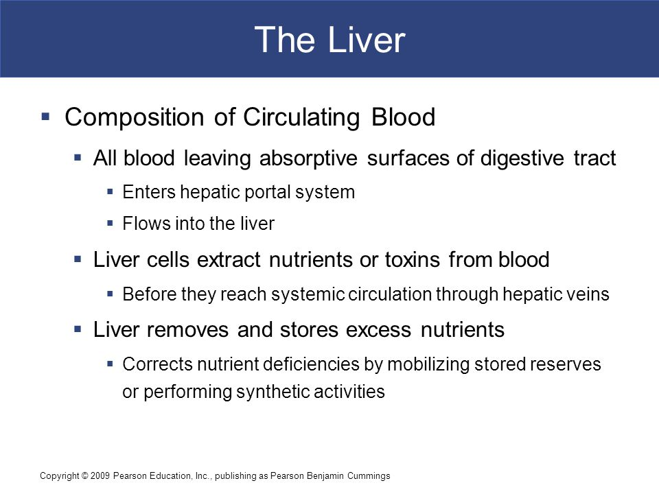 The Liver Composition of Circulating Blood
