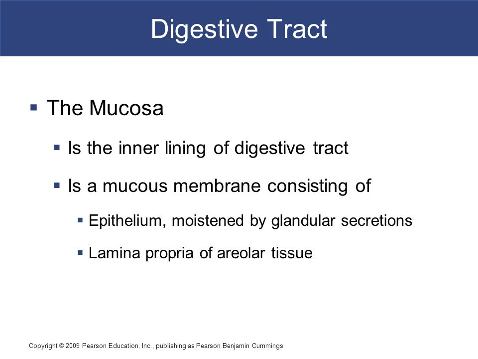Digestive Tract The Mucosa Is the inner lining of digestive tract