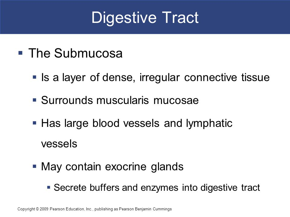 Digestive Tract The Submucosa