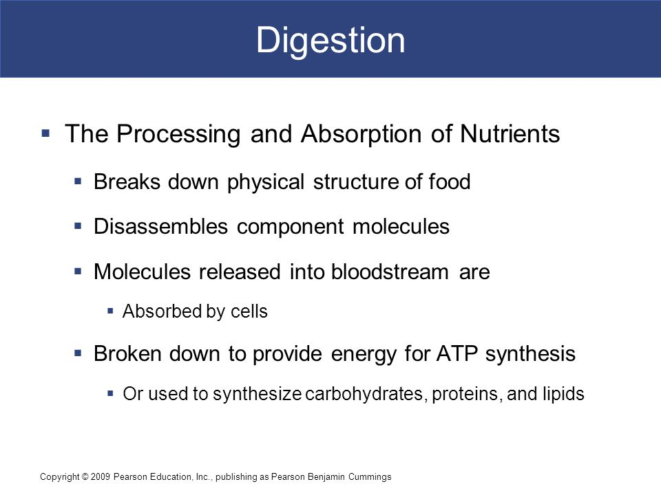 Digestion The Processing and Absorption of Nutrients