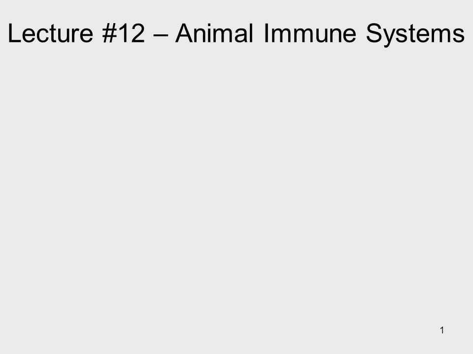 Lecture #12 – Animal Immune Systems