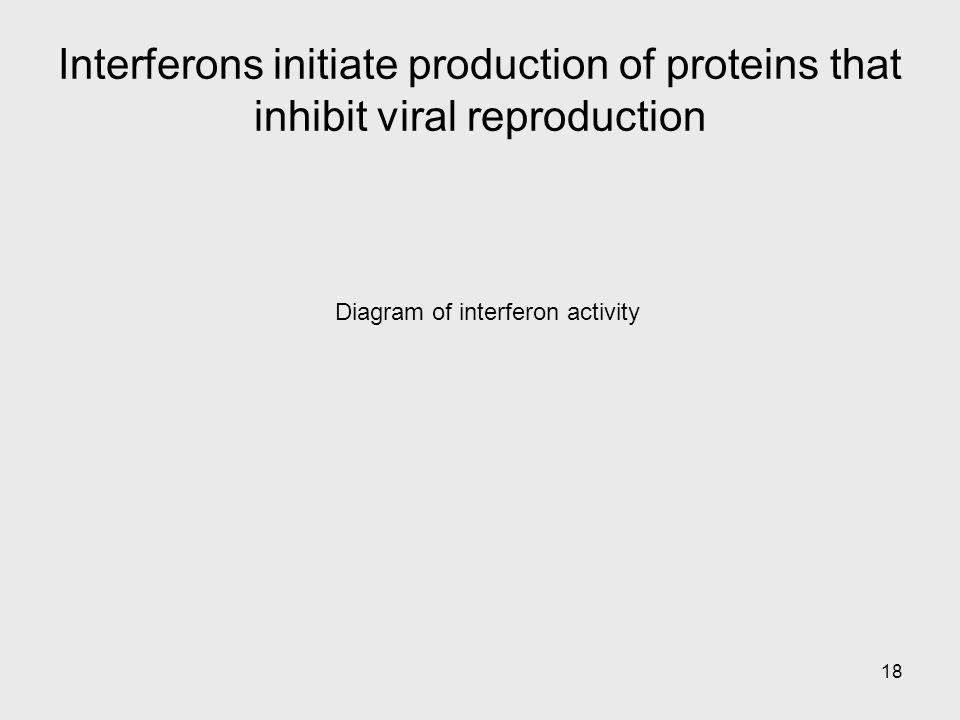 Diagram of interferon activity