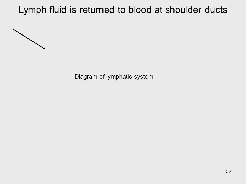 Lymph fluid is returned to blood at shoulder ducts