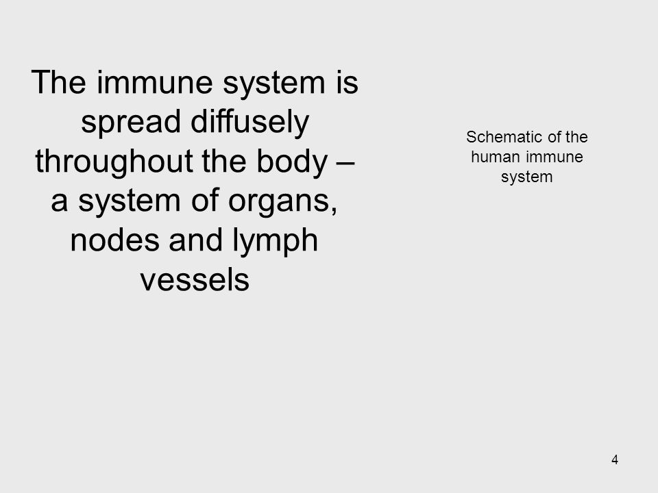 Schematic of the human immune system
