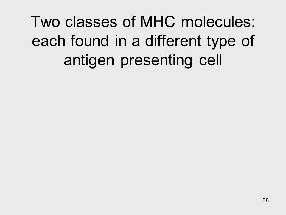 Two classes of MHC molecules: each found in a different type of antigen presenting cell