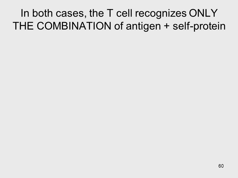 In both cases, the T cell recognizes ONLY THE COMBINATION of antigen + self-protein