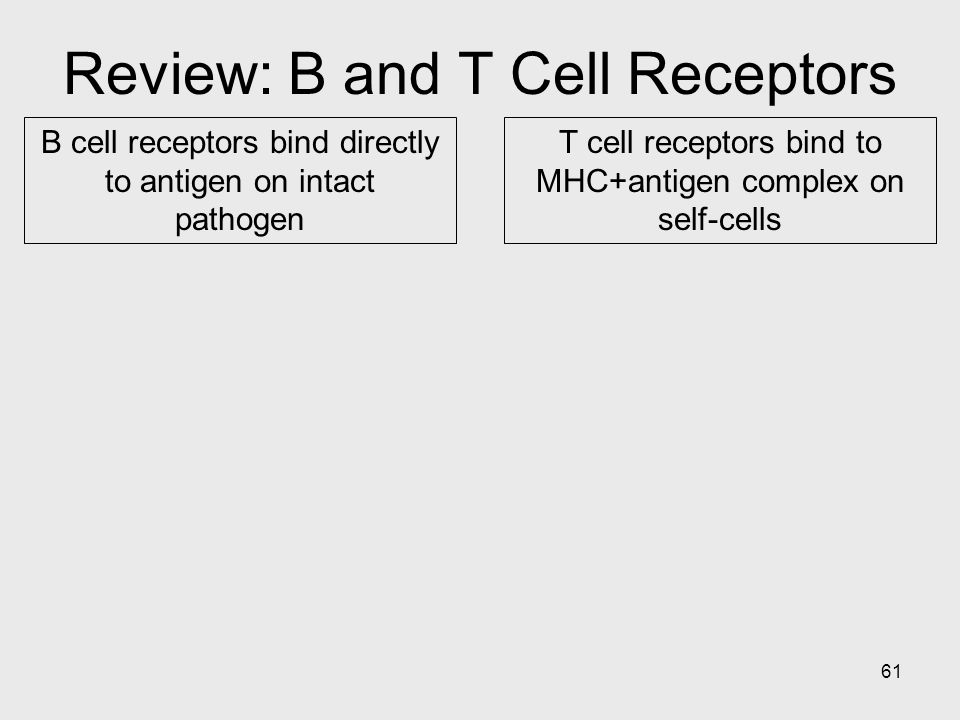 Review: B and T Cell Receptors