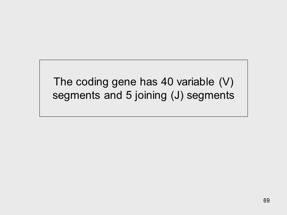 The coding gene has 40 variable (V) segments and 5 joining (J) segments