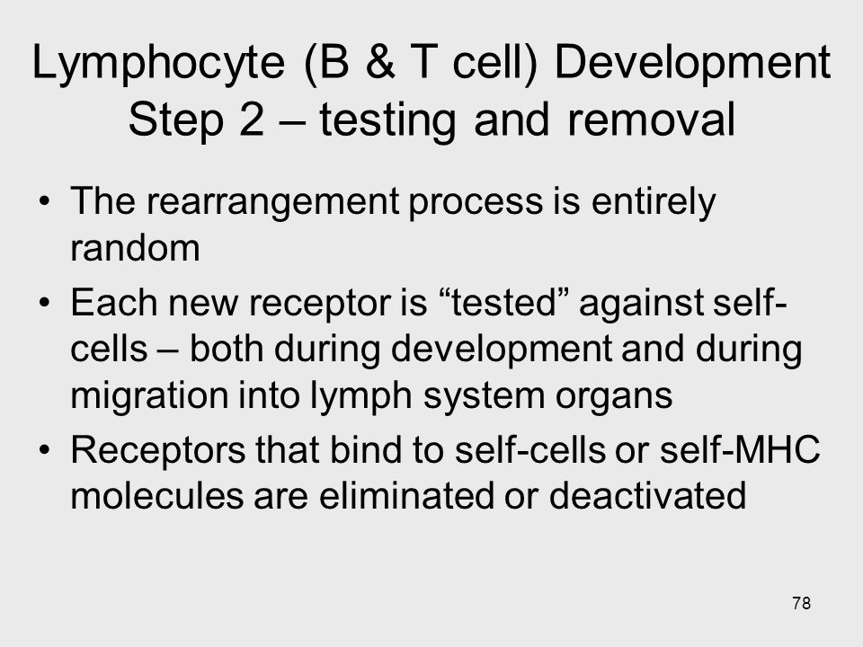 Lymphocyte (B & T cell) Development Step 2 – testing and removal