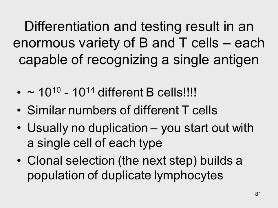 Differentiation and testing result in an enormous variety of B and T cells – each capable of recognizing a single antigen