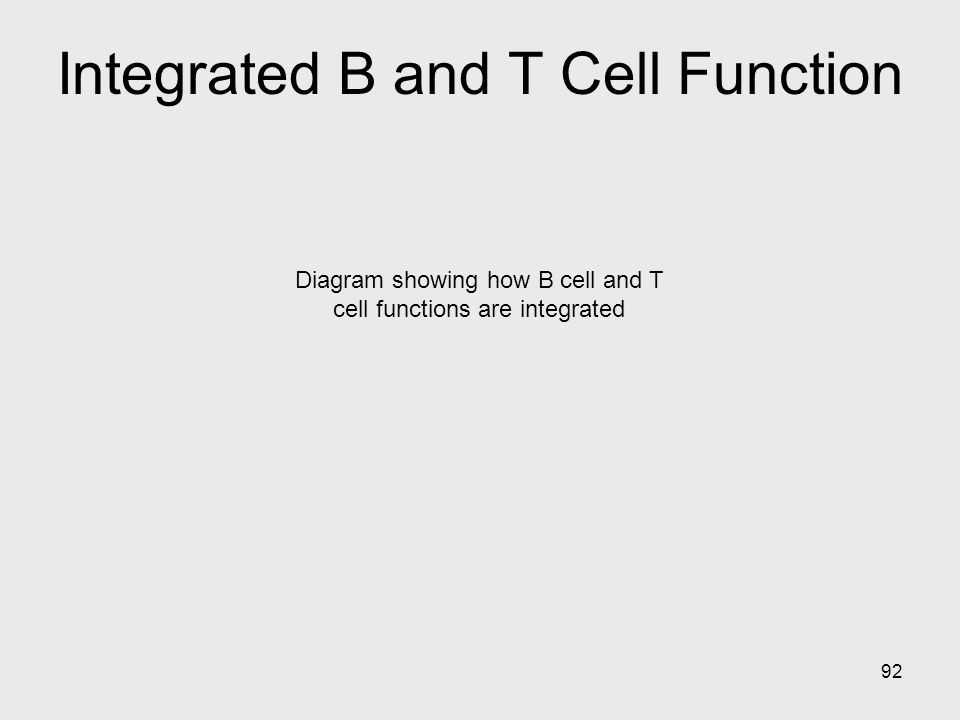 Integrated B and T Cell Function