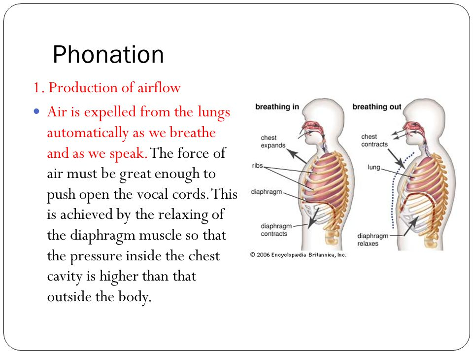 Phonation 1. Production of airflow