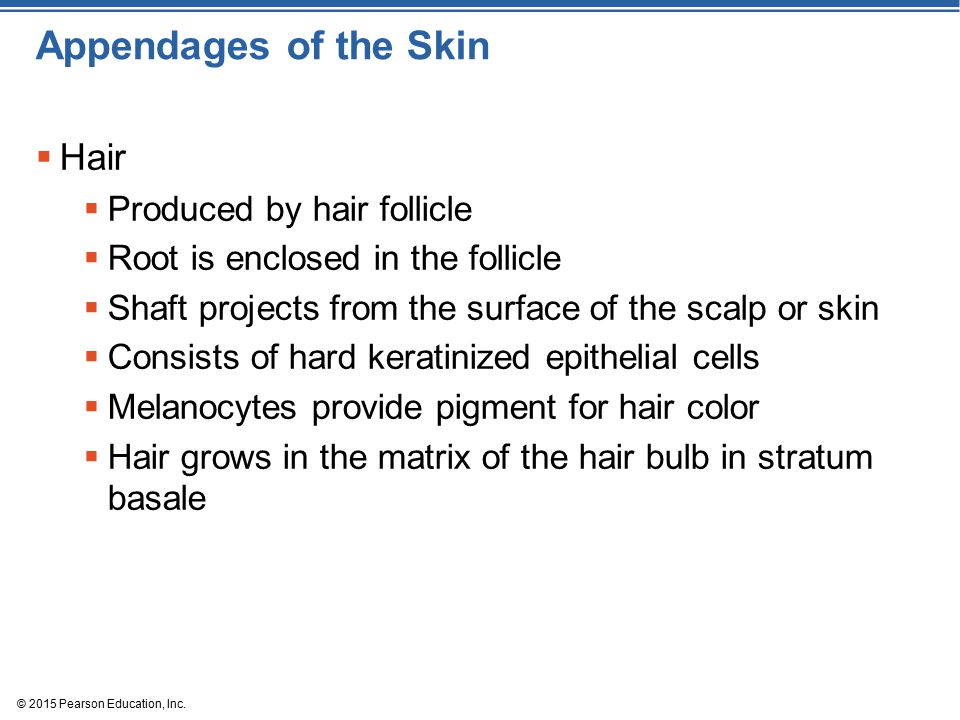 Appendages of the Skin Hair Produced by hair follicle