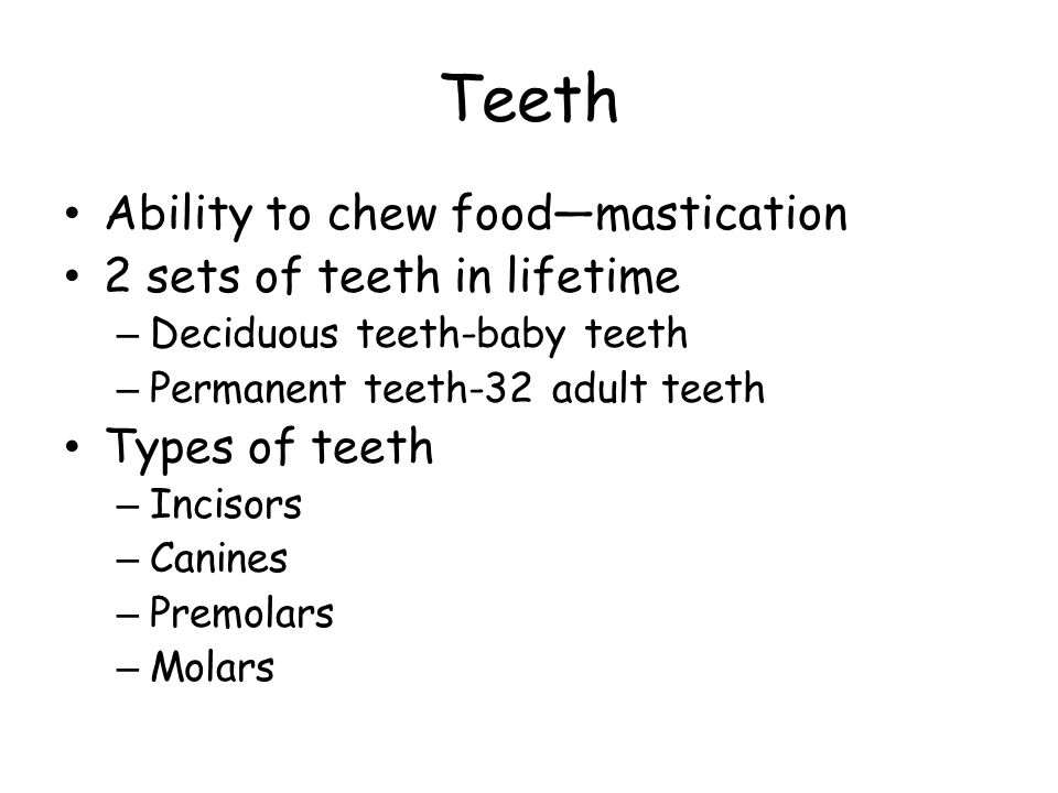Teeth Ability to chew food—mastication 2 sets of teeth in lifetime