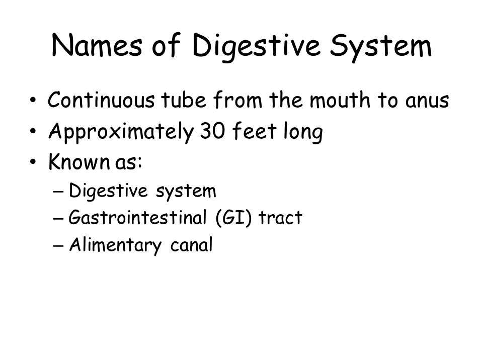 Names of Digestive System