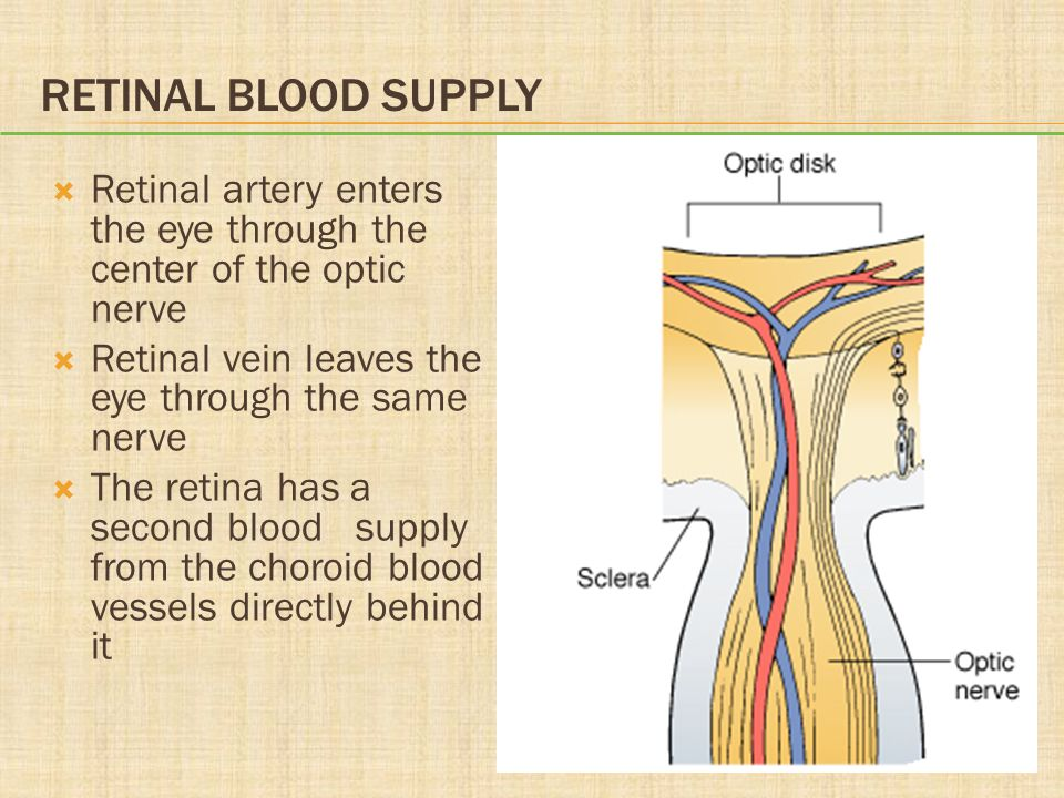 Retinal Blood Supply Retinal artery enters the eye through the center of the optic nerve. Retinal vein leaves the eye through the same nerve.
