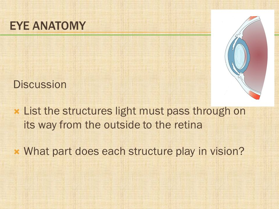 Eye Anatomy Discussion