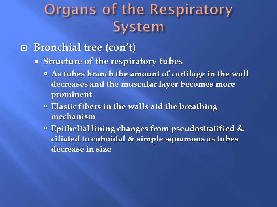 Organs of the Respiratory System