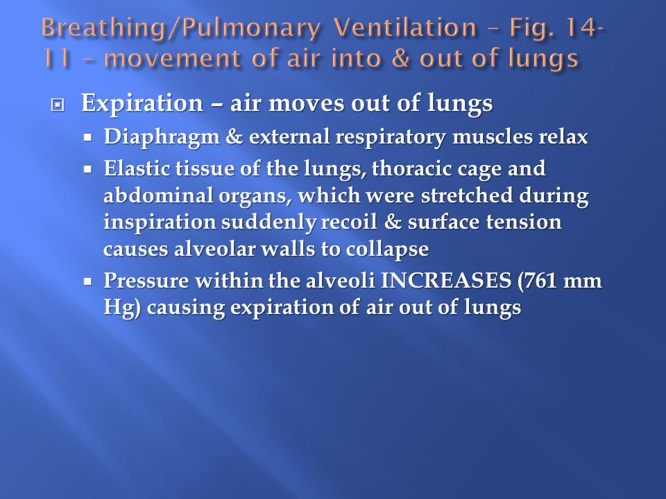 Expiration – air moves out of lungs