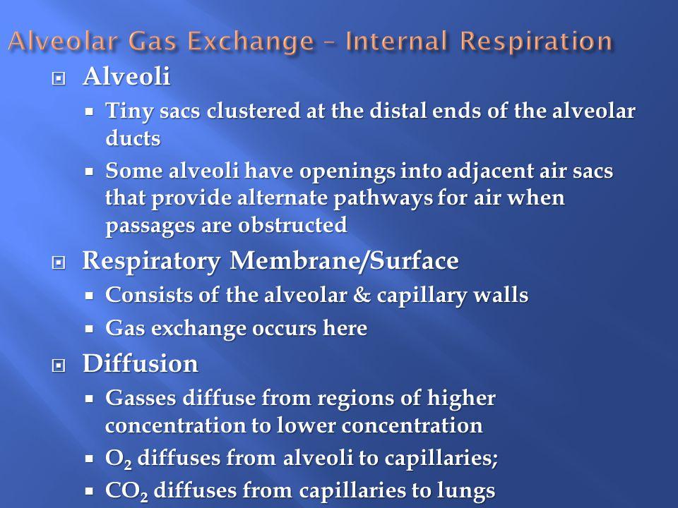 Alveolar Gas Exchange – Internal Respiration