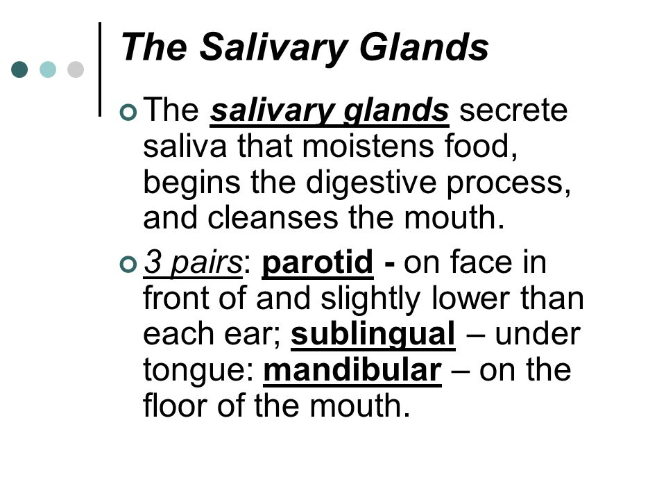 The Salivary Glands The salivary glands secrete saliva that moistens food, begins the digestive process, and cleanses the mouth.
