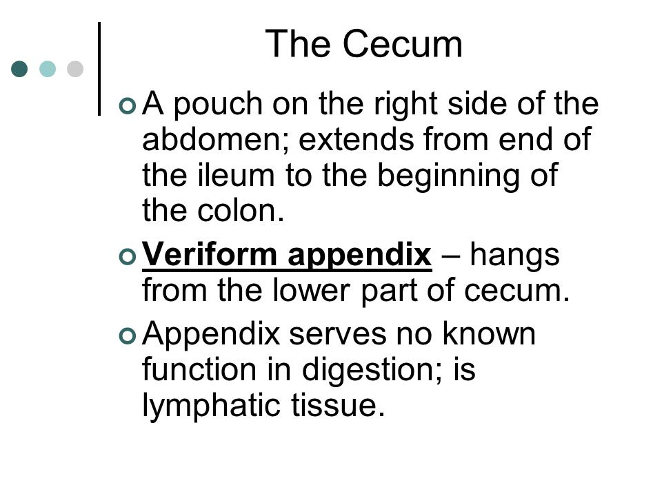 The Cecum A pouch on the right side of the abdomen; extends from end of the ileum to the beginning of the colon.