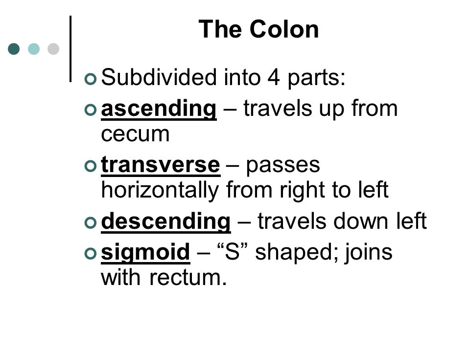 The Colon Subdivided into 4 parts: ascending – travels up from cecum