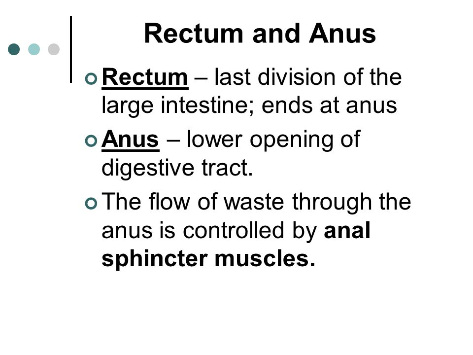 Rectum and Anus Rectum – last division of the large intestine; ends at anus. Anus – lower opening of digestive tract.
