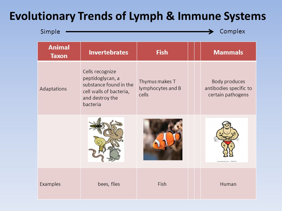 Evolutionary Trends of Lymph & Immune Systems