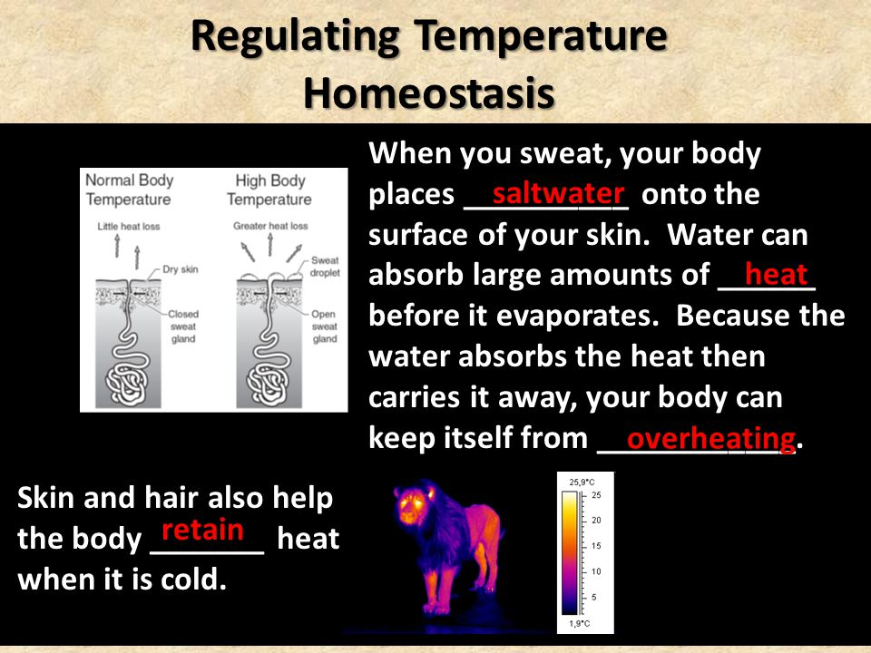 Regulating Temperature