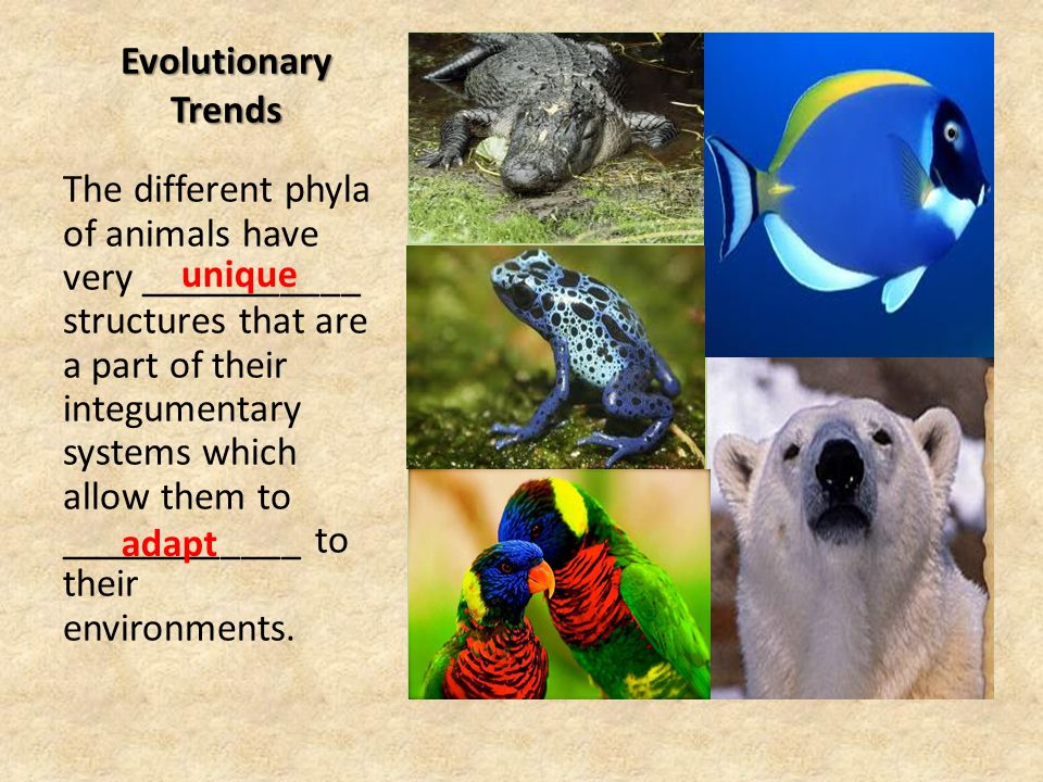Evolutionary Trends