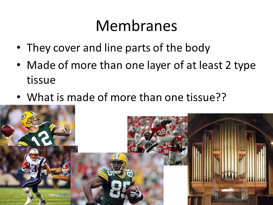 Membranes They cover and line parts of the body