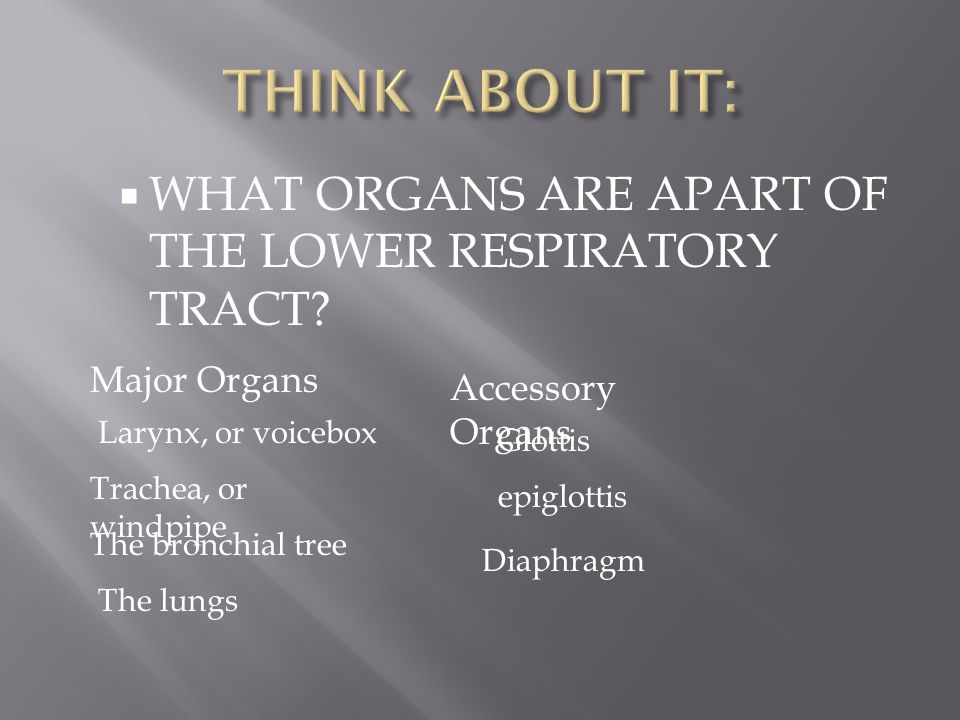 THINK ABOUT IT: WHAT ORGANS ARE APART OF THE LOWER RESPIRATORY TRACT