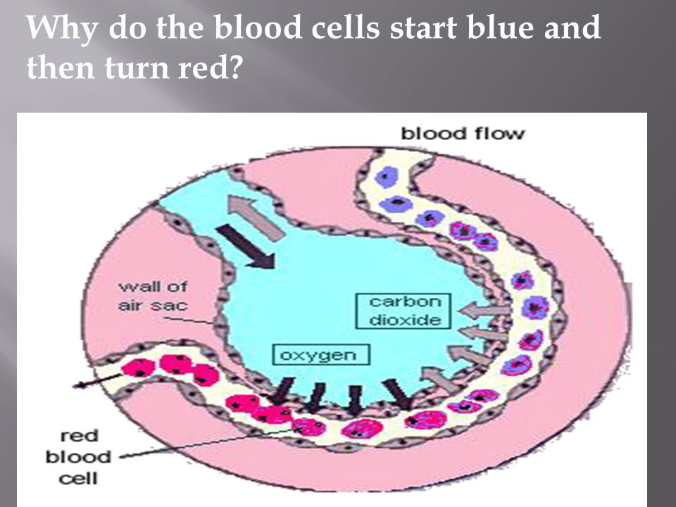 Why do the blood cells start blue and then turn red