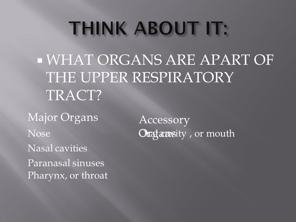 THINK ABOUT IT: WHAT ORGANS ARE APART OF THE UPPER RESPIRATORY TRACT