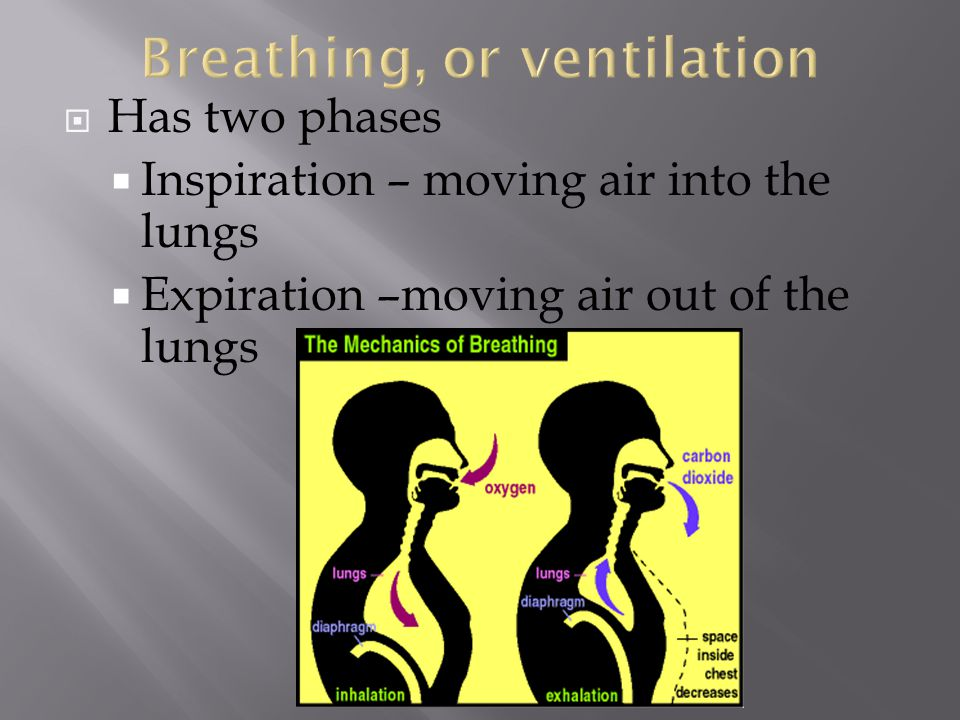 Breathing, or ventilation
