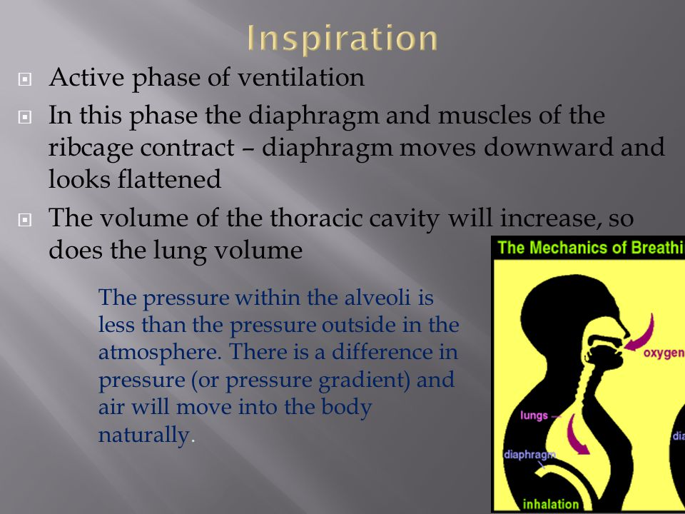 Inspiration Active phase of ventilation