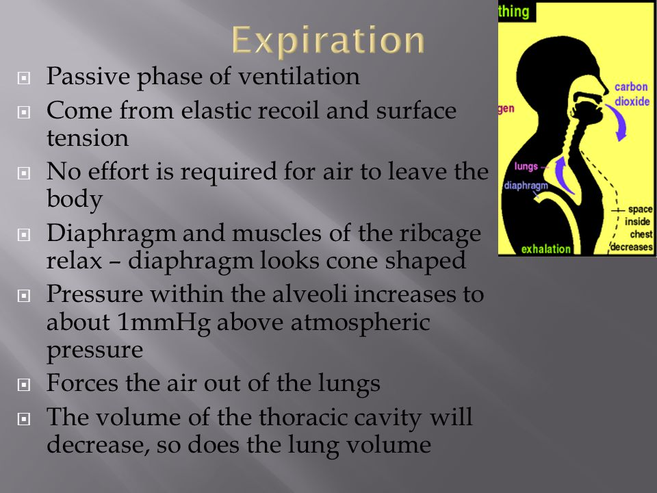 Expiration Passive phase of ventilation