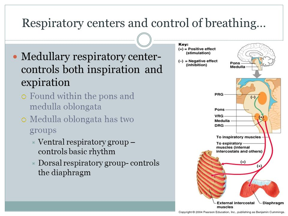 Respiratory centers and control of breathing…