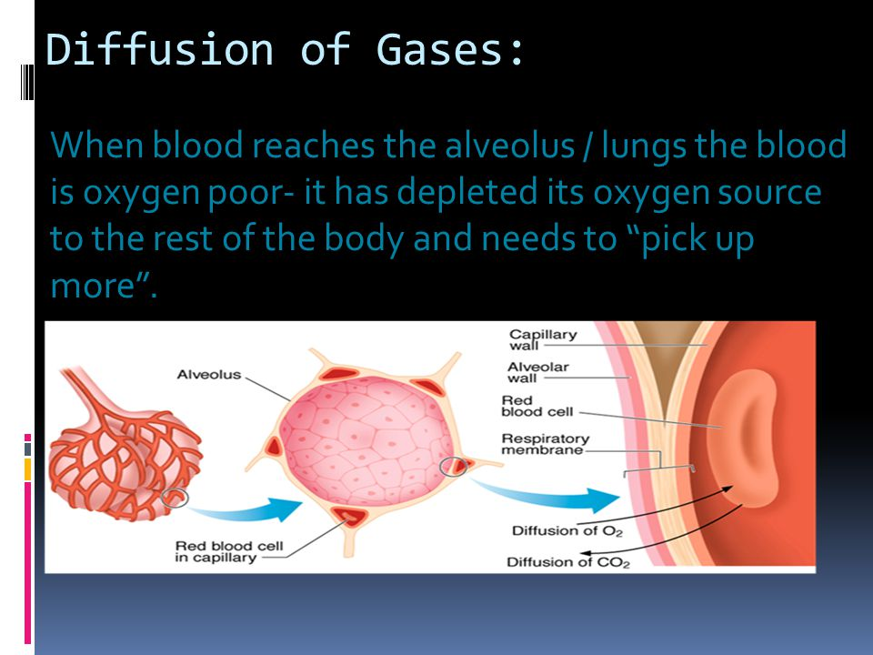 Diffusion of Gases:
