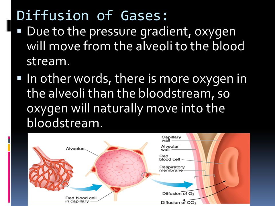 Diffusion of Gases: Due to the pressure gradient, oxygen will move from the alveoli to the blood stream.