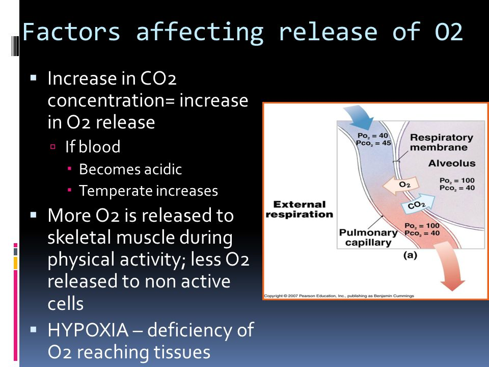 Factors affecting release of O2